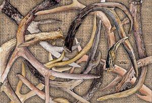 Carolines Treasures 8732PLMT Deer Horns Fabric Placemat Multicolor