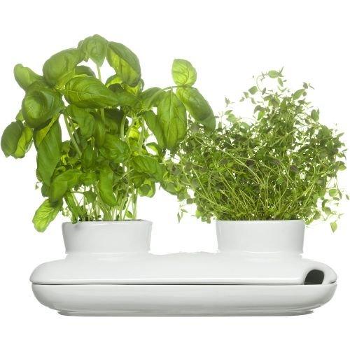 Sagaform 5015859 Stoneware Herb Pot Duo White