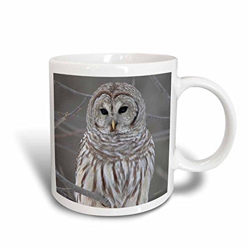 3dRose Barred Owl Mug 11-Ounce